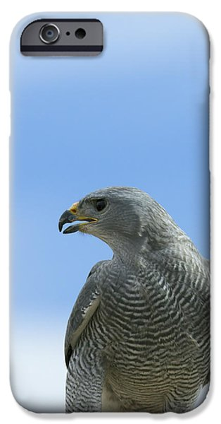 Hawk Art Print iPhone Cases - Grey Hawk iPhone Case by Phill  Doherty
