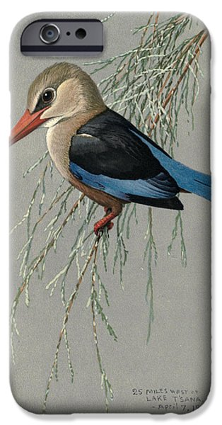 Ethiopia iPhone Cases - Gray Headed Kingfisher iPhone Case by Louis Agassiz Fuertes