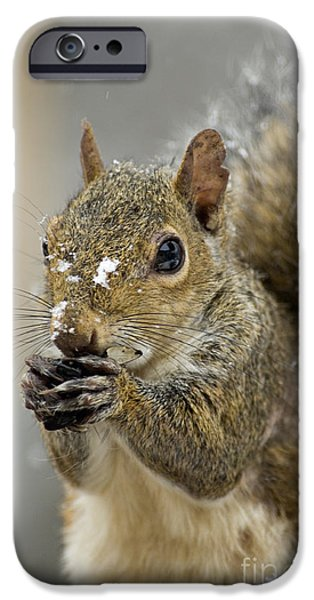 Gray Squirrel - D008392  iPhone Case by Daniel Dempster
