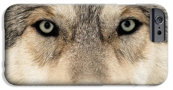 Nature Study iPhone Cases - Gray Wolf Face iPhone Case by Louise Murray
