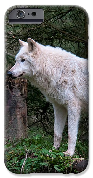 Gray Wolf White Morph iPhone Case by Mark Newman
