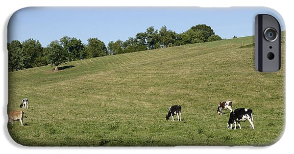 Tennessee Farm iPhone Cases - Grazing Cows in Beautiful Rural Tennessee  iPhone Case by Brendan Reals