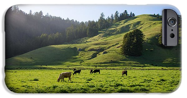 Cmlbrown iPhone Cases - Grazing Hillside iPhone Case by CML Brown