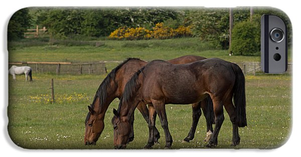 Wildlife Photographs iPhone Cases - Grazing Horses iPhone Case by Robert Carr