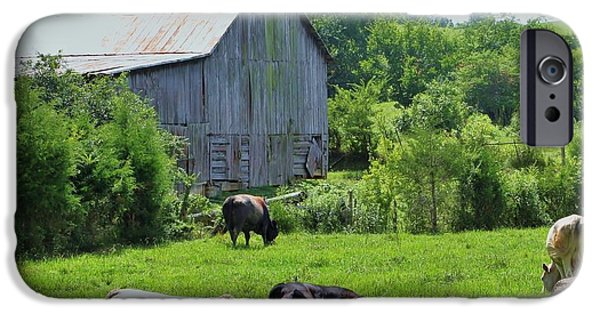 Fed iPhone Cases - Grazing Near The Barn iPhone Case by Chuck  Hicks