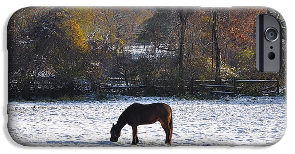 Snowy Day iPhone Cases - Grazing on a Snowy Day iPhone Case by Bill Cannon
