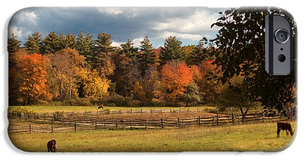 Fall Scenes iPhone Cases - Grazing on the Farm iPhone Case by Joann Vitali