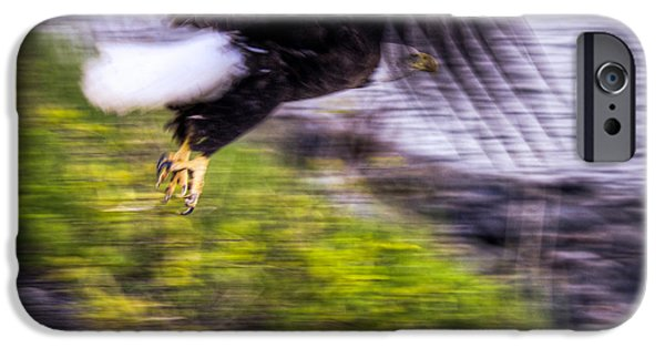 4th July iPhone Cases - Great American Bald Eagle in Flight Homer Alaska iPhone Case by Natasha Bishop