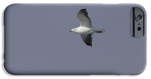 Flying Seagull iPhone Cases - Great Black-backed Gull In Flight 1 iPhone Case by Thomas Young