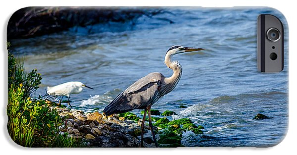 Recently Sold -  - Snowy iPhone Cases - Great Blue Heron and Snowy Egret at Dinner Time iPhone Case by Debra Martz