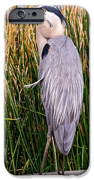 Fauna iPhone Cases - Great Blue Heron iPhone Case by Edward Fielding