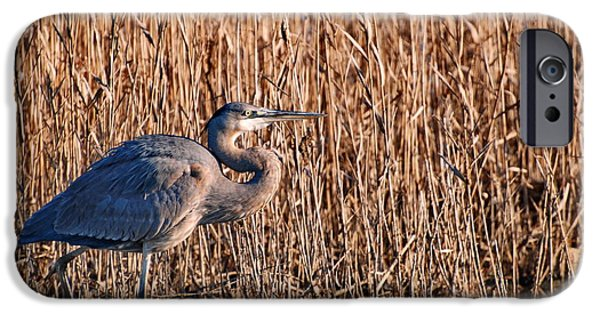 Nature Center Pond iPhone Cases - Great Blue Heron in Swamp iPhone Case by Francie Davis