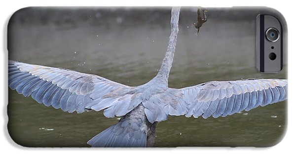 Flying Frog iPhone Cases - Great Blue Heron Inflight with Frog iPhone Case by DJE  Photography