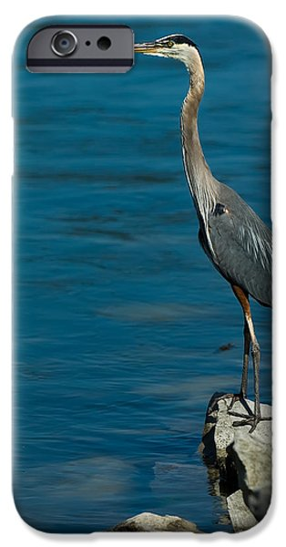 Watching iPhone Cases - Great Blue Heron iPhone Case by Sebastian Musial
