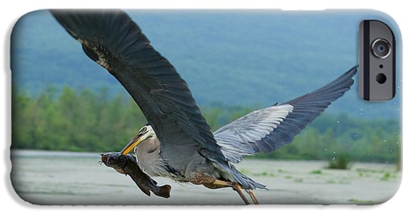 Canandaigua Lake iPhone Cases - Great Blue Heron With Fish iPhone Case by Roger Bailey