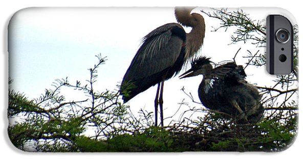 Baby Bird iPhone Cases - Great Blue Heron with Fledglings II iPhone Case by Suzanne Gaff