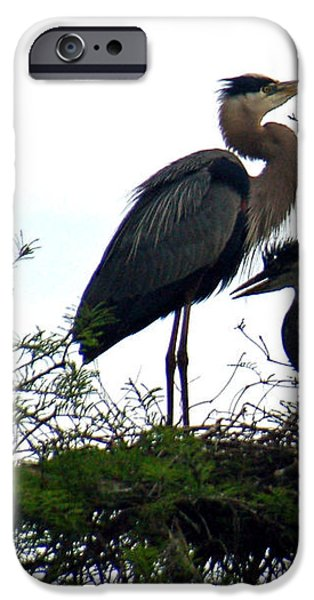 Great Blue Heron with Fledglings II iPhone Case by Suzanne Gaff