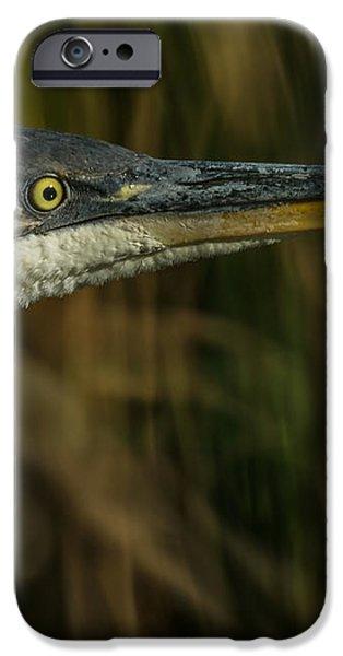 Great Blue Profile iPhone Case by Ernie Echols