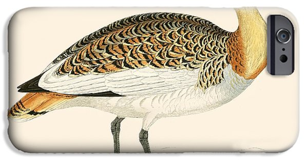 Hunting Bird iPhone Cases - Great Bustard iPhone Case by Beverley R. Morris