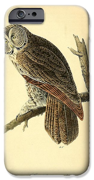 Business Drawings iPhone Cases - Great Cinerous Owl iPhone Case by John James Audubon