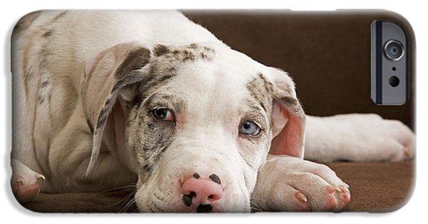 Great Dane Puppy iPhone Cases - Great Dane Puppy Dog iPhone Case by Jean-Michel Labat