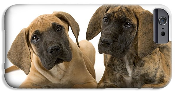 Great Dane Puppy iPhone Cases - Great Dane Puppy Dogs iPhone Case by Jean-Michel Labat