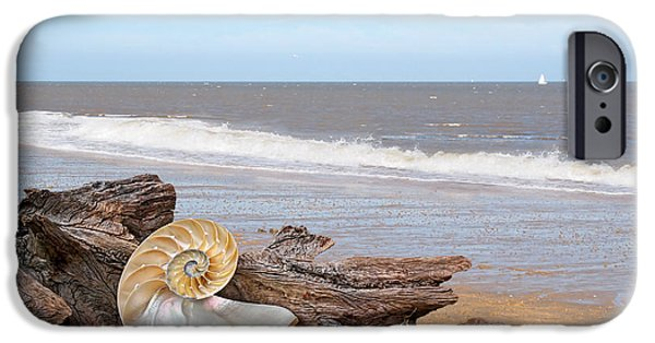 Interior Scene iPhone Cases - Great Day For Beachcombing - Driftwood and Shells iPhone Case by Gill Billington