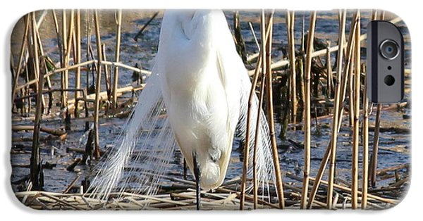 Chatham iPhone Cases - Great Egret iPhone Case by Amy Rounseville