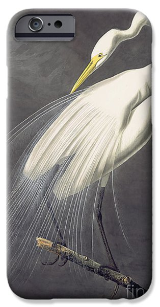 Wild Life Drawings iPhone Cases - Great Egret  iPhone Case by Celestial Images