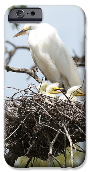 Baby Bird iPhone Cases - Great Egret Nest with Chicks and Mama iPhone Case by Carol Groenen