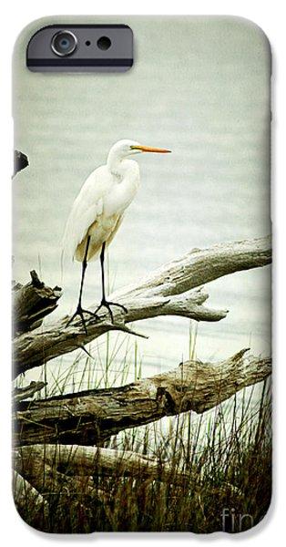 Great Egret on a Fallen Tree iPhone Case by Joan McCool