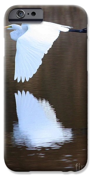 Florida Wildlife iPhone Cases - Great Egret over the Pond iPhone Case by Carol Groenen