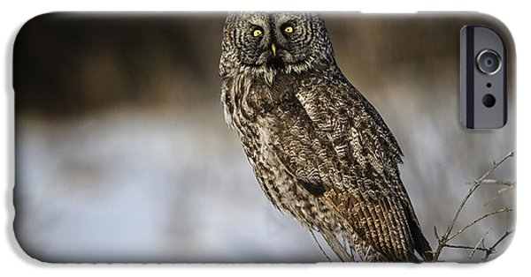 Disc iPhone Cases - Great Gray Owl 2 iPhone Case by Gary Hall