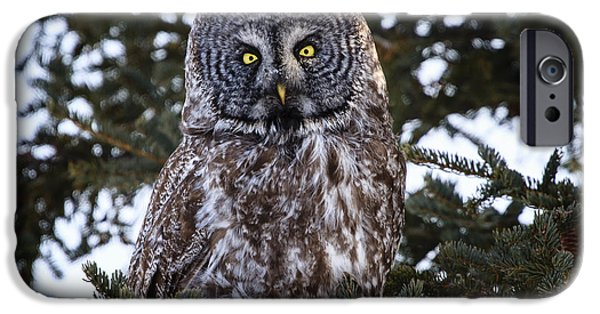 Disc iPhone Cases - Great Gray Owl iPhone Case by Gary Hall