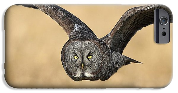 Flight Pyrography iPhone Cases - Great Gray Owl in flight iPhone Case by Daniel Behm