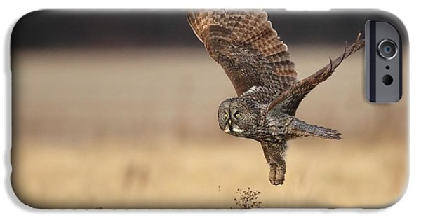 Flight Pyrography iPhone Cases - Great Gray owl liftoff iPhone Case by Daniel Behm