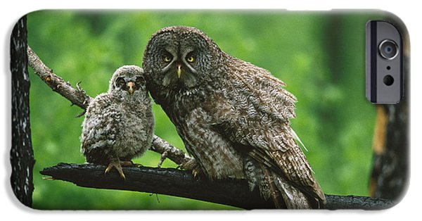 Birds iPhone Cases - Great Gray Owl With Chick Saskatchewan iPhone Case by Tom Vezo