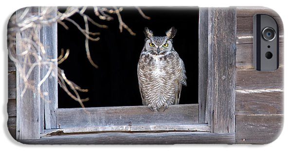 Us Wildllife iPhone Cases - Great Horned Owl iPhone Case by Jim Zipp