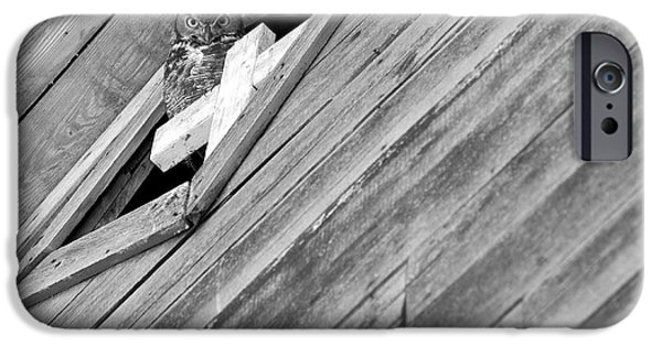 Barn Print Photographs iPhone Cases - Great Horned Owl iPhone Case by Theresa Tahara