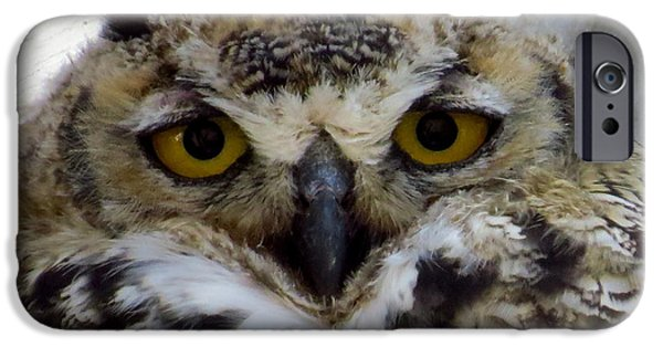 Baby Bird iPhone Cases - Great Horned Owlet iPhone Case by Craig Corwin