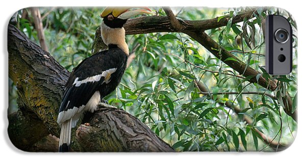 Hornbill iPhone Cases - Great Indian Hornbill iPhone Case by Art Wolfe