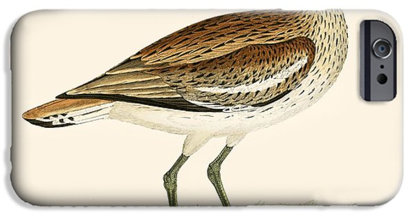 Hunting Bird iPhone Cases - Great Plover iPhone Case by Beverley R. Morris