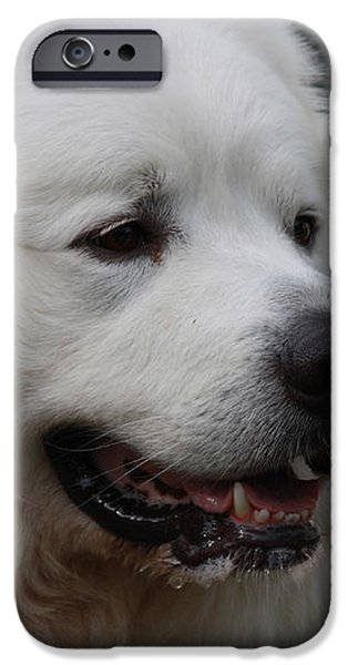 Great Pyrnesse Side Profile iPhone Case by JOHN TELFER