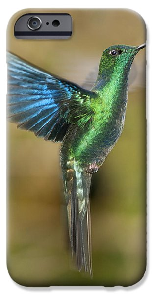 Great Sapphirewing Hummingbird iPhone Case by Dan Suzio
