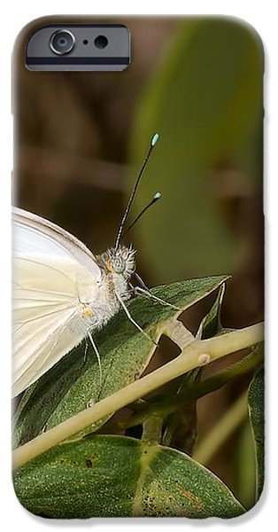 Great Southern White Butterfly iPhone Case by Rudy Umans