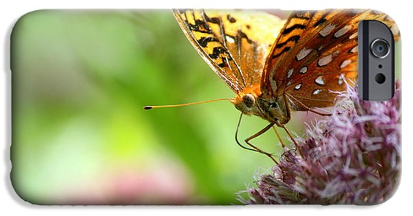 Insects iPhone Cases - Great Spangled Fritillary Butterfly Portrait  iPhone Case by Neal  Eslinger