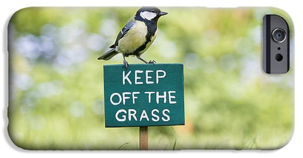 Fauna iPhone Cases - Great Tit on a Keep Off The Grass Sign iPhone Case by Tim Gainey