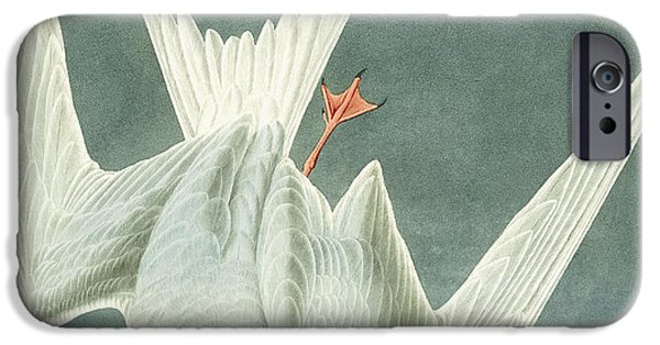 Feather Drawings iPhone Cases - Great Turn iPhone Case by John James Audubon