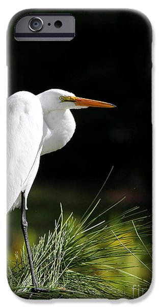 Cattle Egret iPhone Cases - Great White Egret in the Tree iPhone Case by Sabrina L Ryan