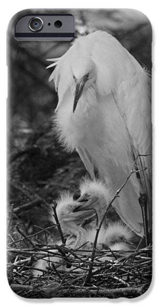 Baby Bird iPhone Cases - Great White Egret Mom and Chicks III in Black and White iPhone Case by Suzanne Gaff